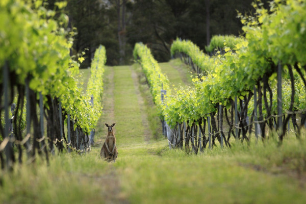 Book your bespoke wine tasting tour in the Hunter Valley with Vyne