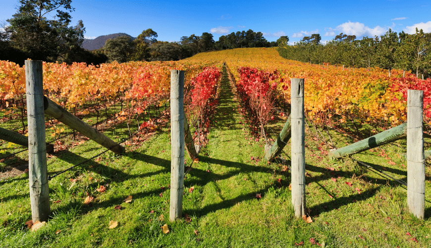 Best time to visit Hunter Valley wine region